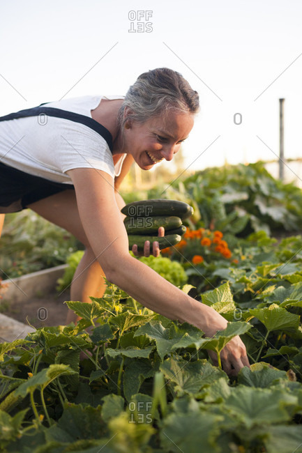 A Woman Smiles While Harvesting Cucumbers From Her Garden In Fort Langley