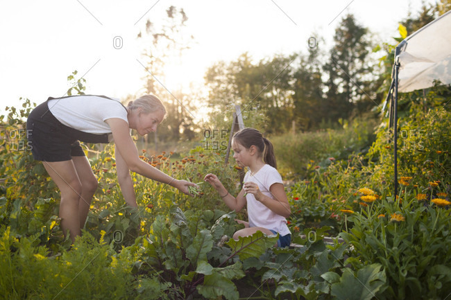 A Mother And Daughter Harvest Beans From Their Garden In Fort Langley