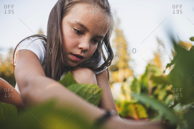 A Young Girl Harvesting Vegetables From Her Garden In Fort Langley