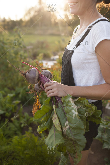 A Woman Holds A Clump Of Freshly Picked Beets From Her Garden In Fort Langley
