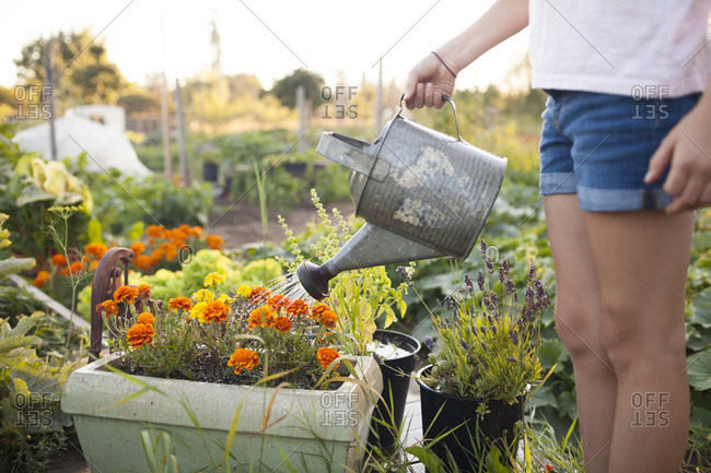 A Young Girl Watering Flowers In The Garden In Fort Langley