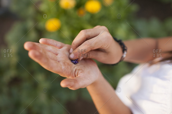 A Young Girl Rubs Lavender On Her Dirty Hands After Gardening
