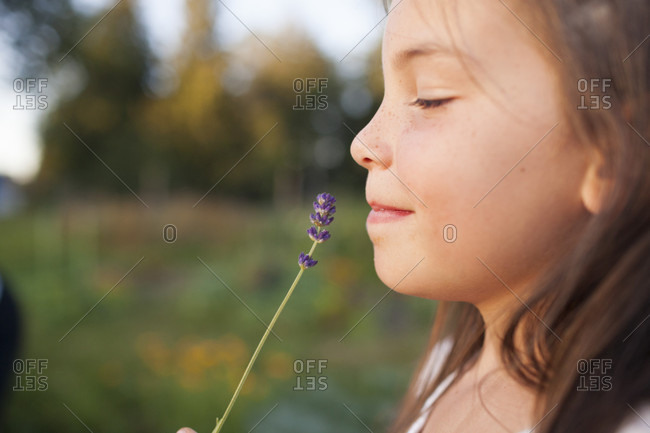 A Young Girl Smells A Stem Of Lavender