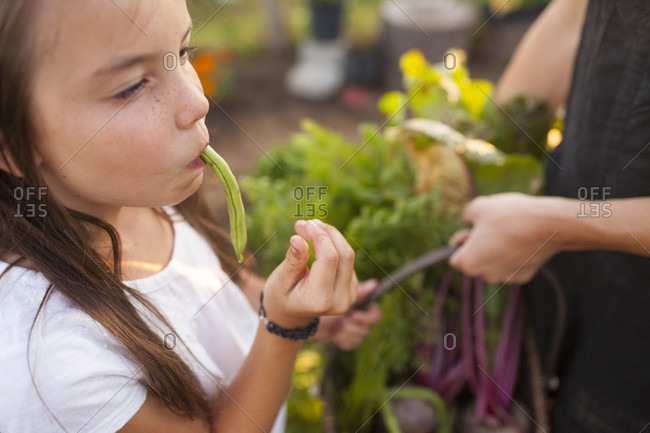 A Young Girl Eats A Green Bean While Harvesting Vegetables From Her Garden In Fort Langley