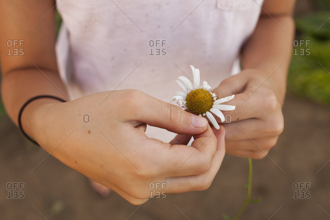 Close-up Of A Young Girl Hand Picking Petals From A Flower