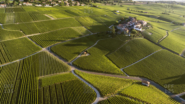 An Aerial View Of The Vineyards In Canton Vaud With Some Houses In The Distance