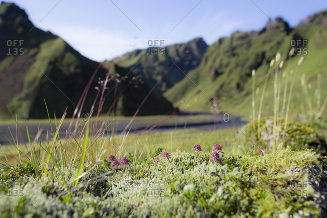 Pink Flowers And Grasses In The Foreground With A Winding Road And Mountains In A Background