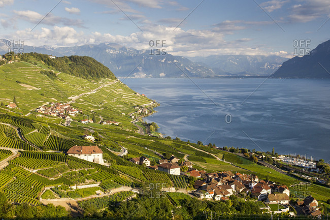 Scenic View Of The Terraced Vineyards Of Le Lavaux