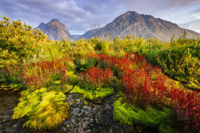 Dwarf Fireweed Adds Dramatic Color To The Landscape At Lake Clark National Park And Preserve