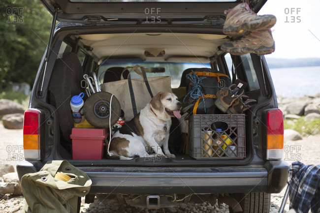 Dog Relaxing On The Back Of A Car During A Road Trip To Adirondacks