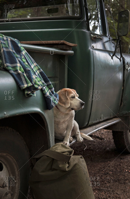 Close-up Of Dog Relaxing On An Old Vintage Pick-up Truck In Adirondack Mountains