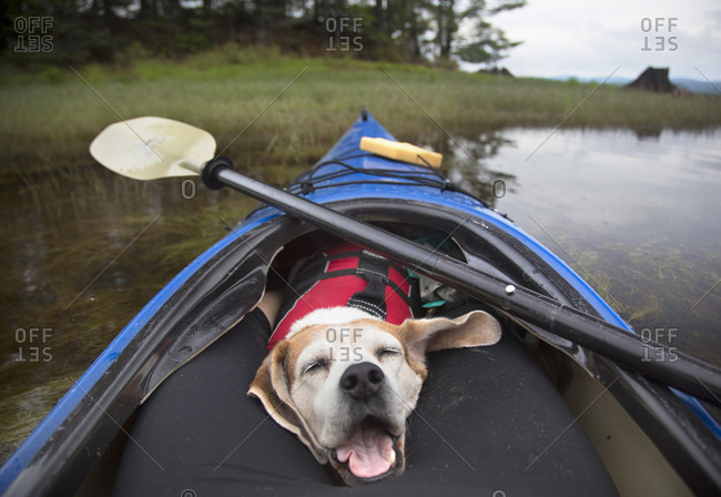 Close-up Of Dog Relaxing In Kayak