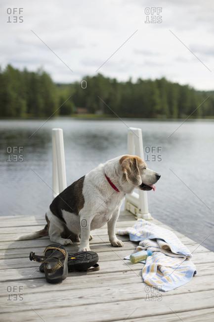 Dog Sitting On The Wooden Dock Alongside Lake In Adirondack