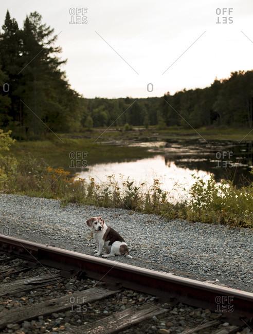 Dog Sitting Near A Railway Track In Adirondacks