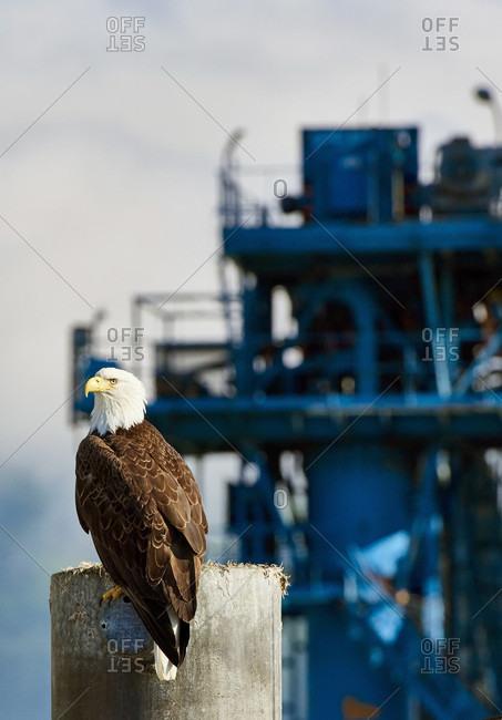 Bald Eagle Perching Near Ship In Alaska