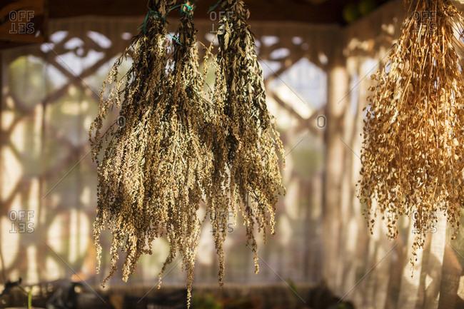 Close-up Of Vegetable Herbs Drying In Veranda