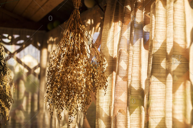 Vegetable Herbs Drying In Veranda