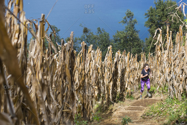A Young Female Trail Runner Crossing Sunlight Cornfields While Lake Atitlan Can Be Seen In The Background