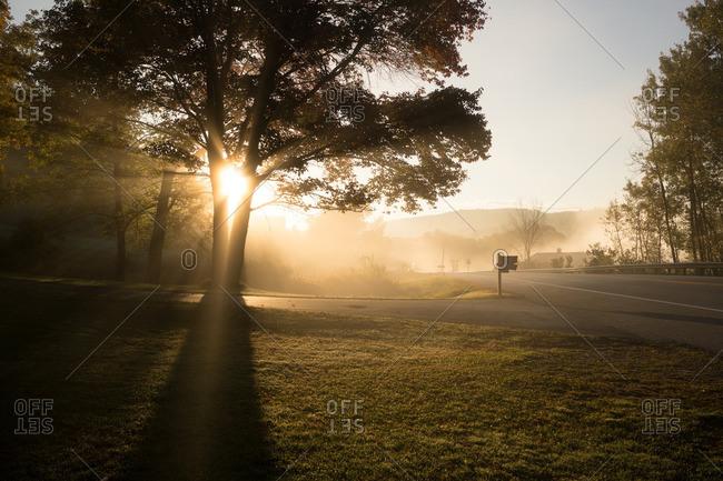Sun shining through trees in a suburban neighborhood