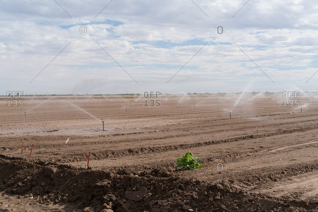 Bare soil farmland being watered for crops