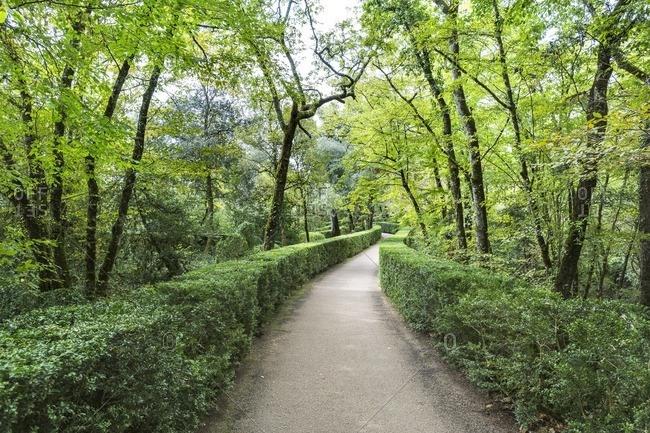 Tree-lined path in Les Jardins de Marqueyssac, Dordogne, France