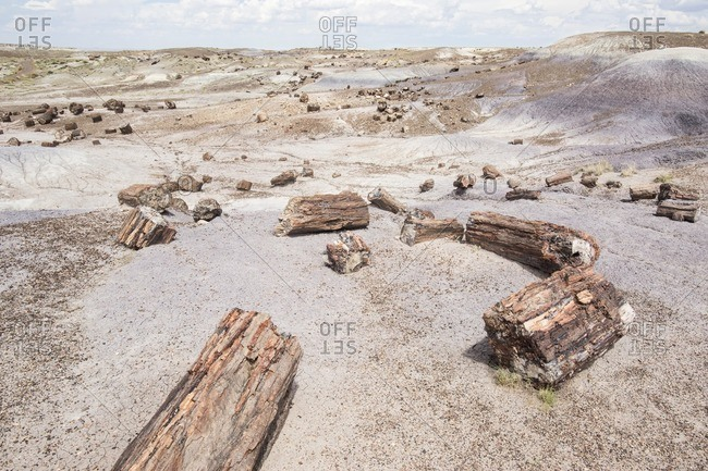 Petrified logs spread along hiking trail, Petrified Forest National Park