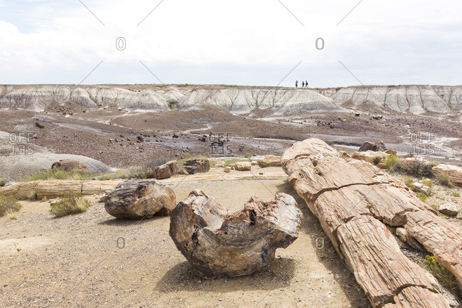 Petrified logs spread along hiking trail, Petrified Forest National Park