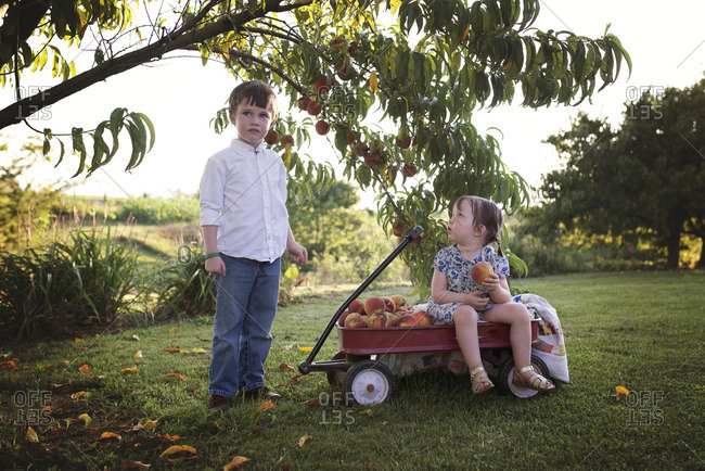 Kids under tree with peaches