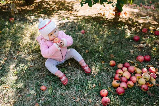 Toddler girl sitting on the ground eating an apple in an orchard