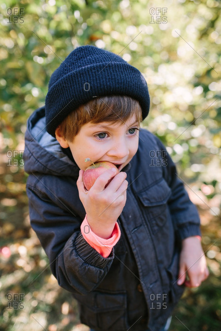 Young boy eating an apple in an orchard