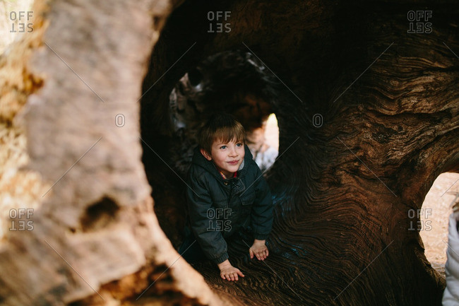 Boy playing in a hollowed out tree log