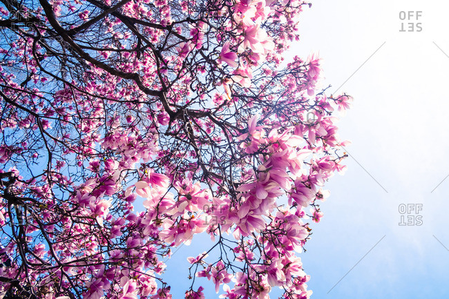 Flowers blooming on tree branches