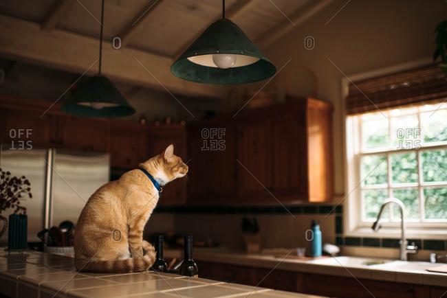 Orange cat sitting on the kitchen counter