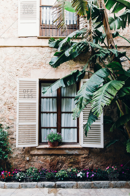 Window details and palm leaves