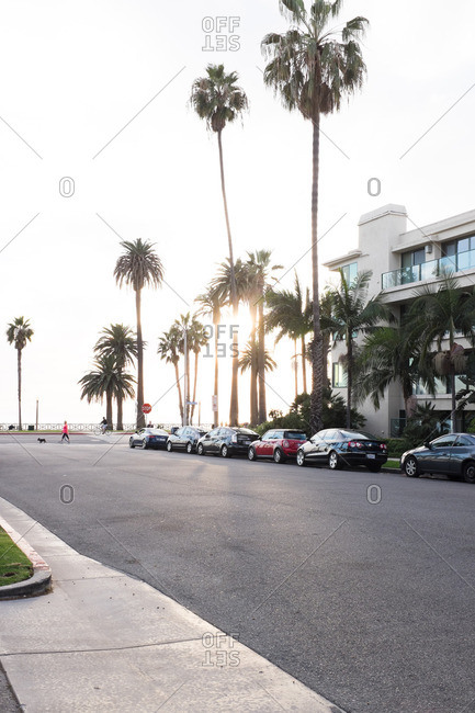 Santa Monica, California, USA - December 21, 2016: Quiet street with palm trees and parked cars