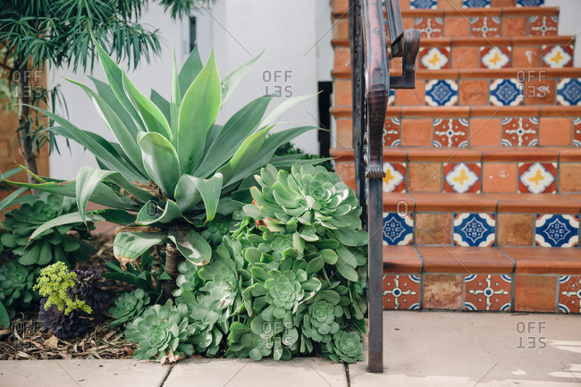 Succulent garden and terracotta stairs