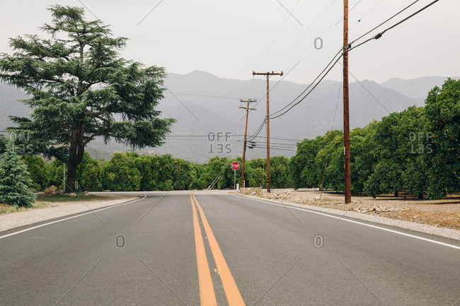 Two lane road surrounded by orange groves
