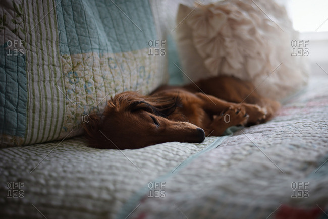 Dog napping on a bed with quilted linens