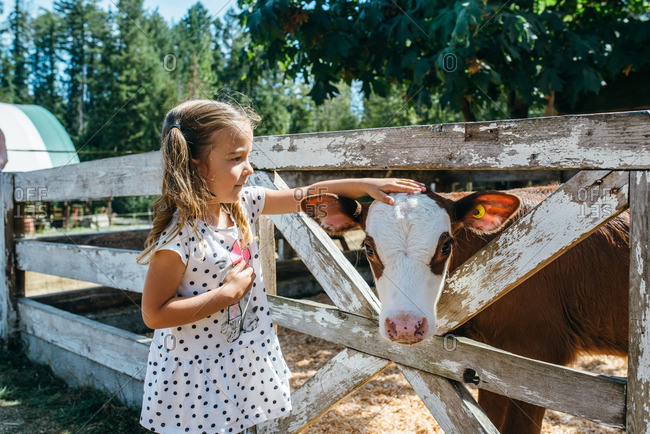 Young girl petting a cow
