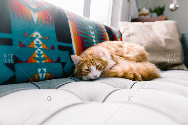 Orange cat curled up on a couch