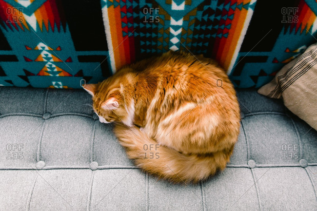 Overhead view of an orange cat curled up on a couch
