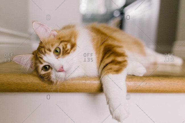 Orange cat lying on the top step of a wooden staircase