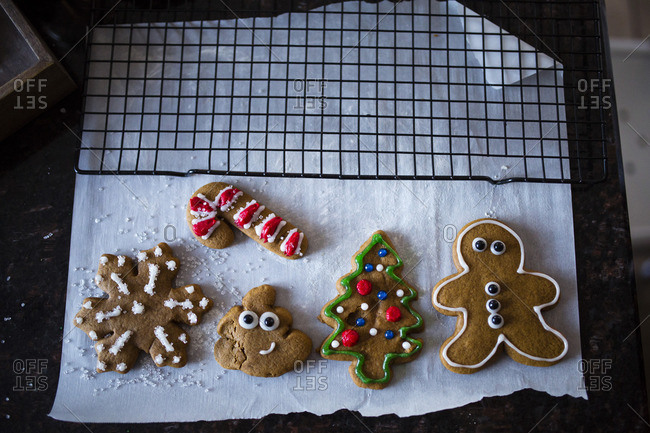 Overhead view of fresh baked gingerbread cookies on parchment paper