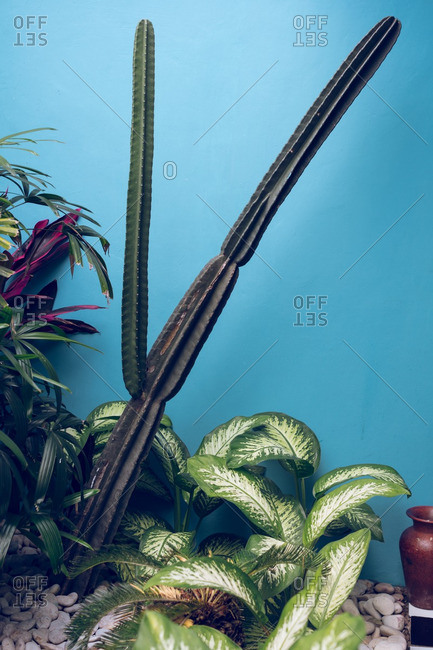 Cactus and leafy plants by a blue wall