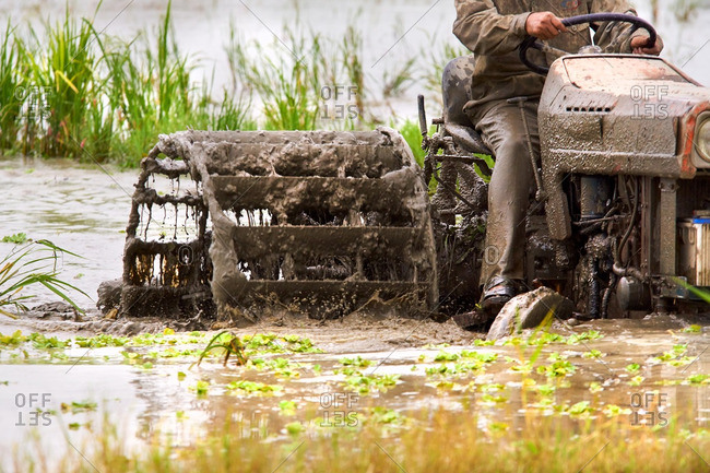 Farmer tilling his flooded rice paddy
