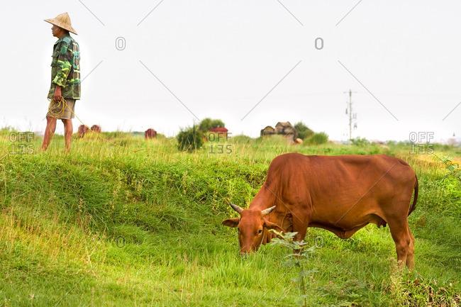 Hanoi, Vietnam - July 19, 2016: Vietnamese farmer with his cow