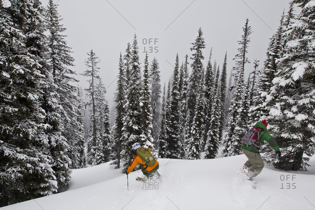 Vernon, British Columbia - March 4, 2010: A man skis deep powder in the monishes while cat skiing