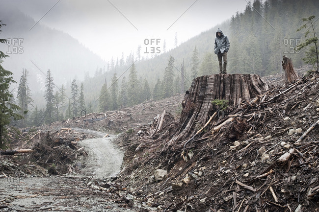 British Columbia, Canada - October 31, 2011: A man stands on an western red cedar (Thuja plicata) stump 11ft in diameter in an old-growth forest clear-cut in the Gordon River Valley near the town of Port Renfrew