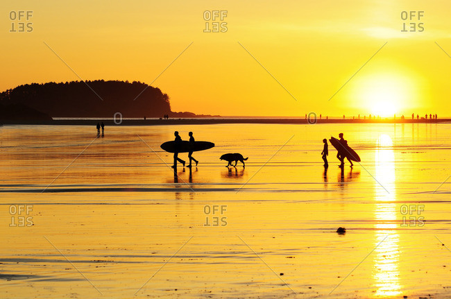 Surfers heading out at sunset on Chesterman Beach in Tofino, BC