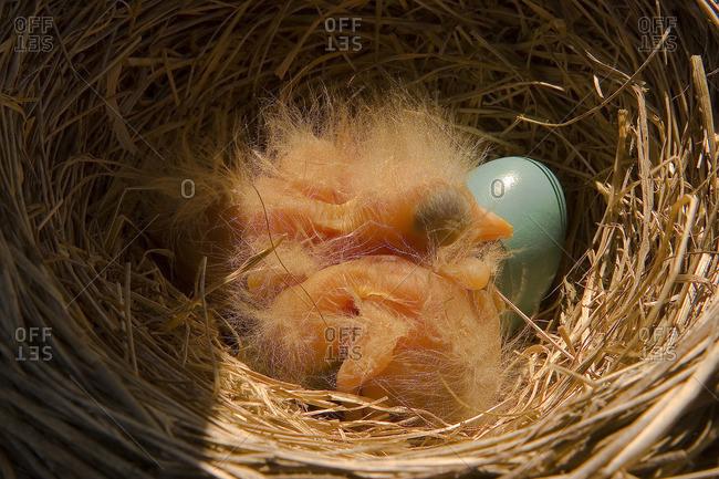 Robin's Nest, Sandbanks Provincial Park, Prince Edward County, Ontario Canada